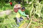 Smallholders in palm oil industry