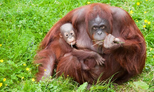 Parody video exposes P&G's use of dirty palm oil