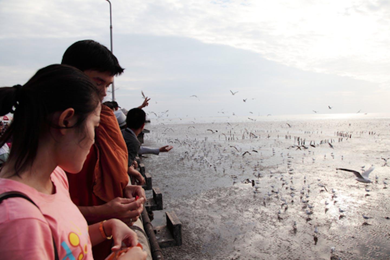 asian bird watching