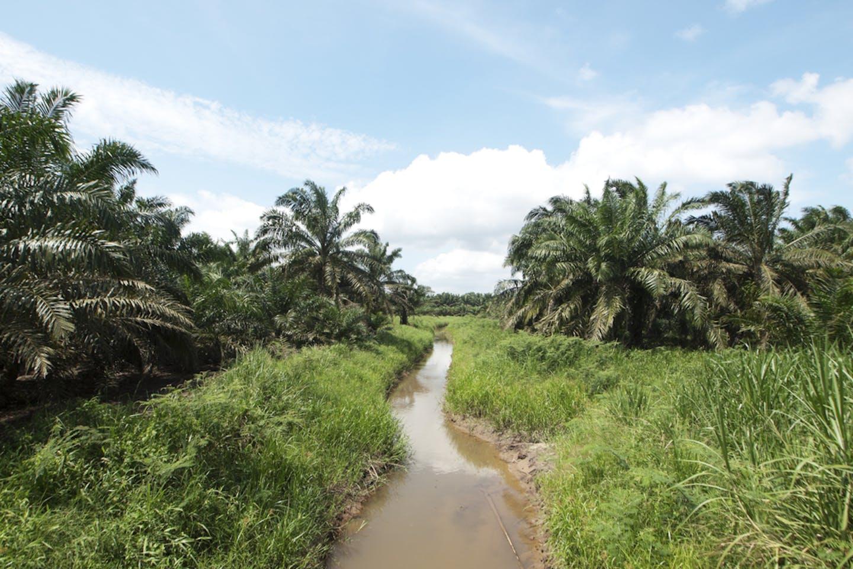 plam oil streams
