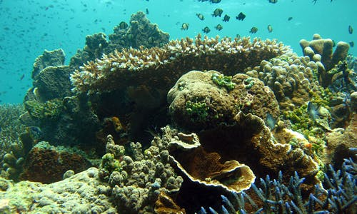 Blue economy for marine resource development