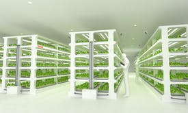 Toshiba showcases the future of vegetables