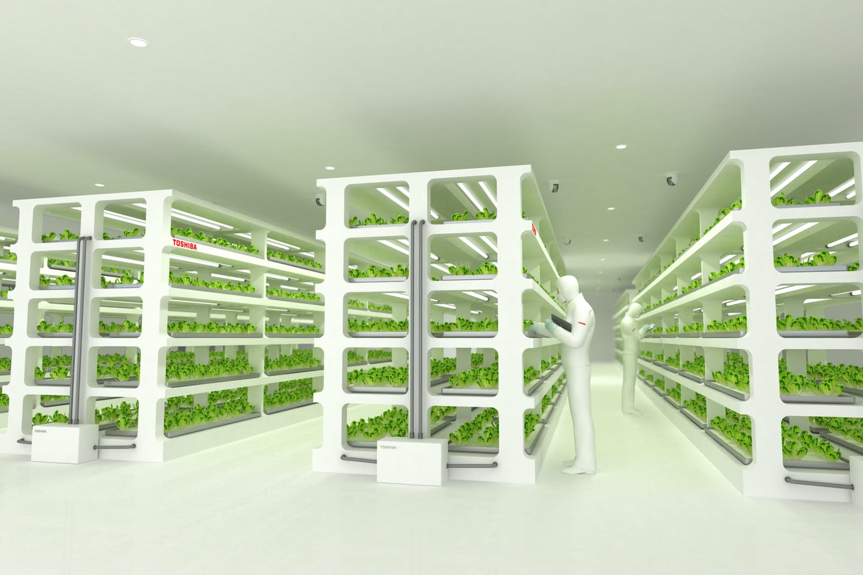 Toshiba veggie factory
