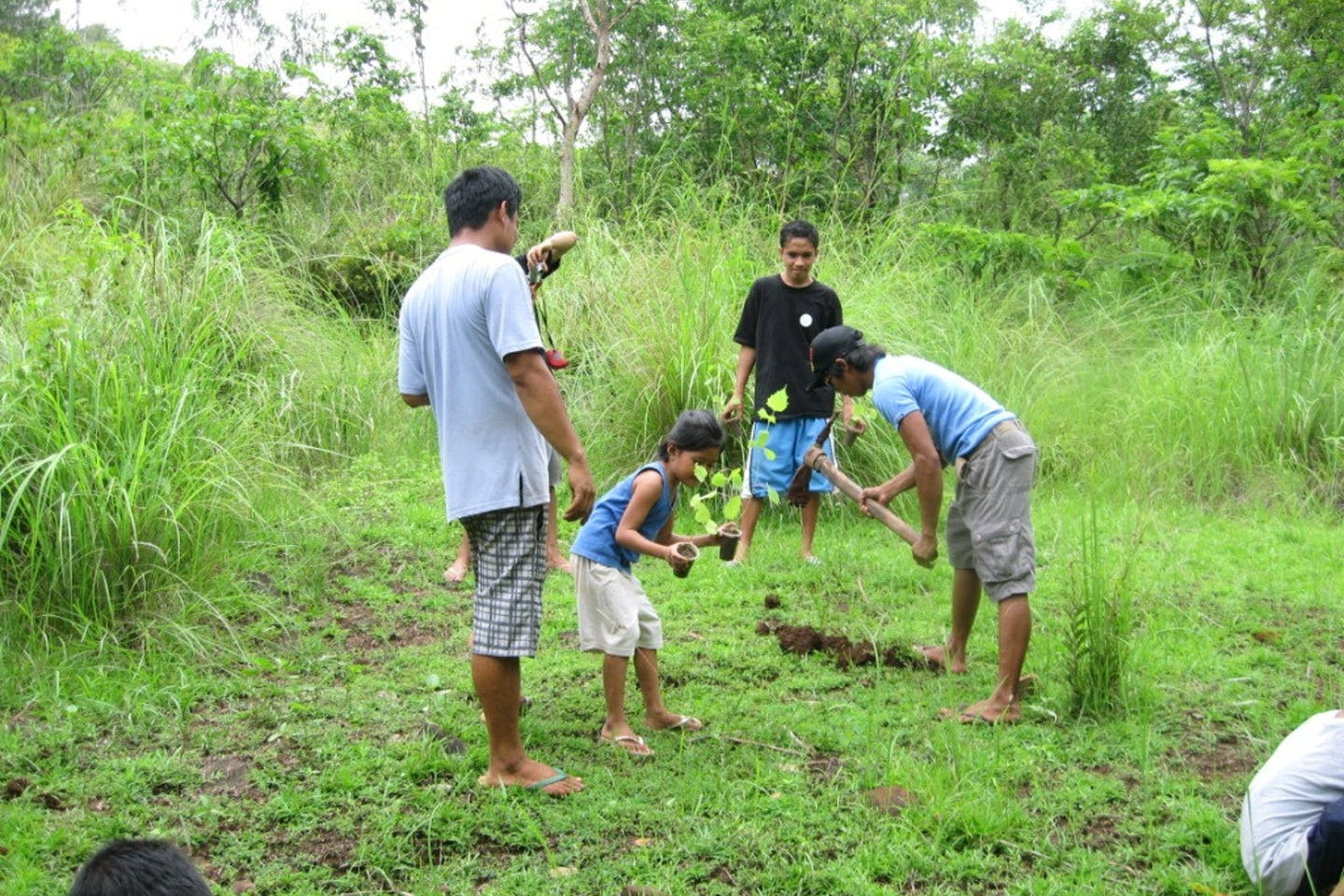 tree planting indonesia