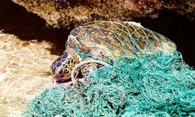 Five ways to tackle ghost fishing gear