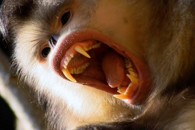 wild studios monkey
