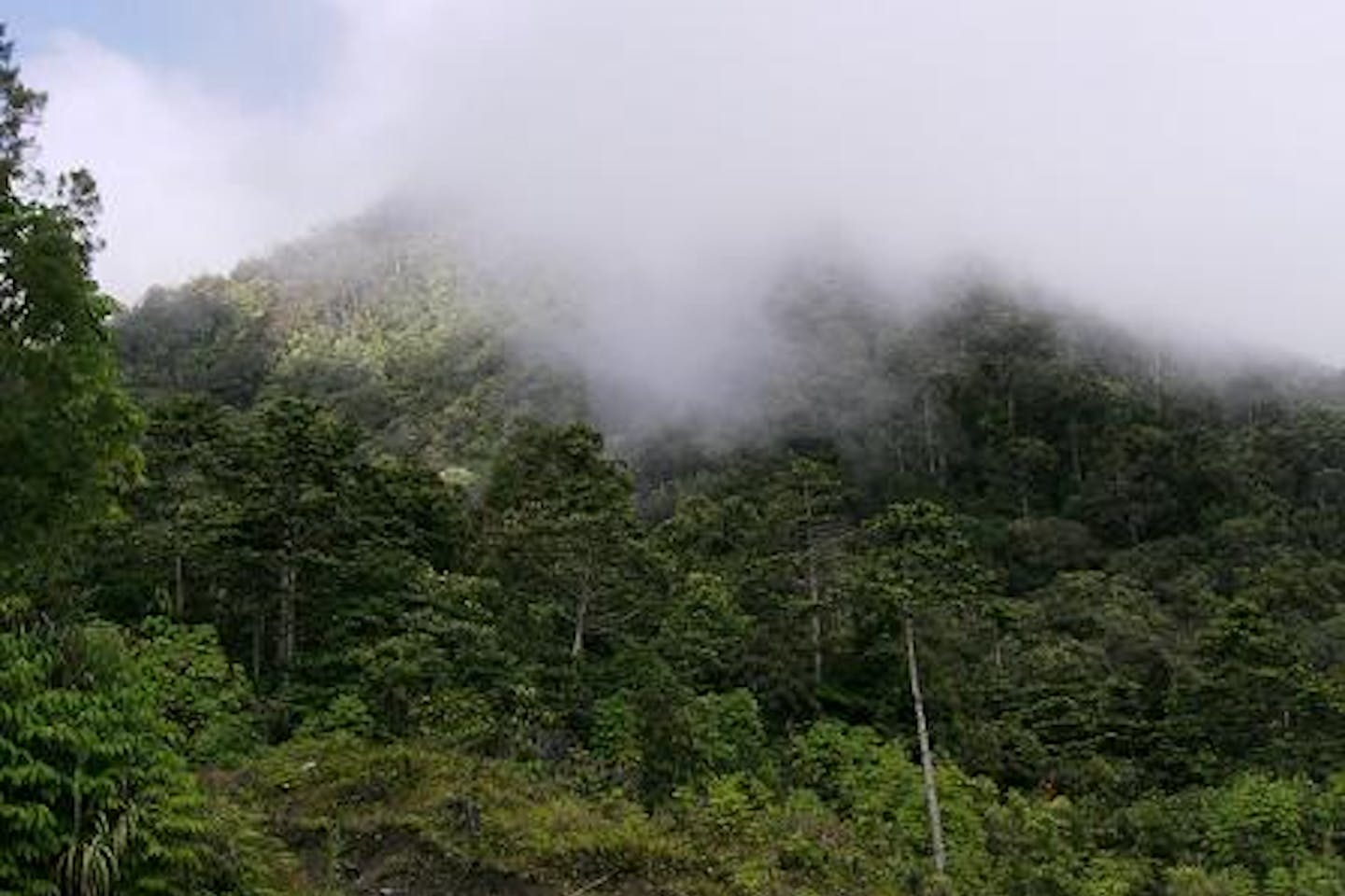 pict-indonesia-forest indonesiaforest co cc