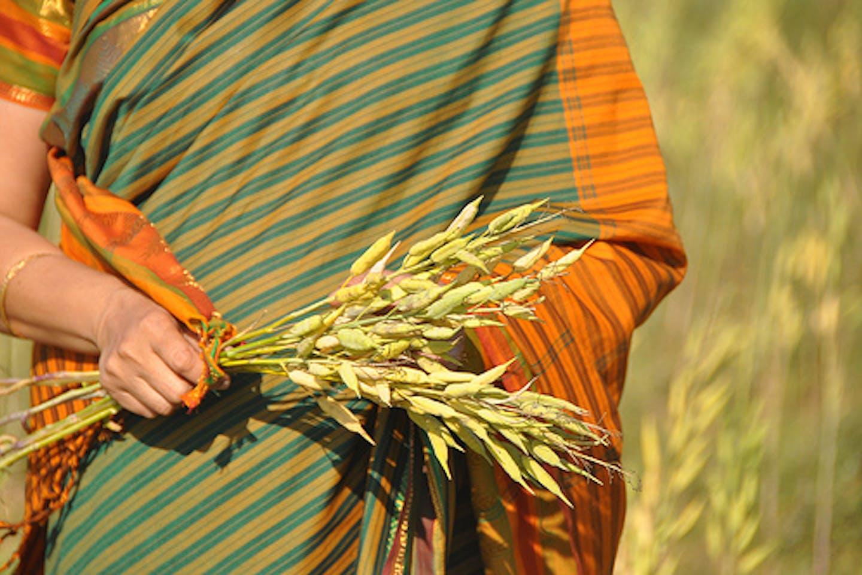 CGIAR food security India