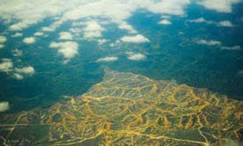 Environment NGOs clash over forest scheme
