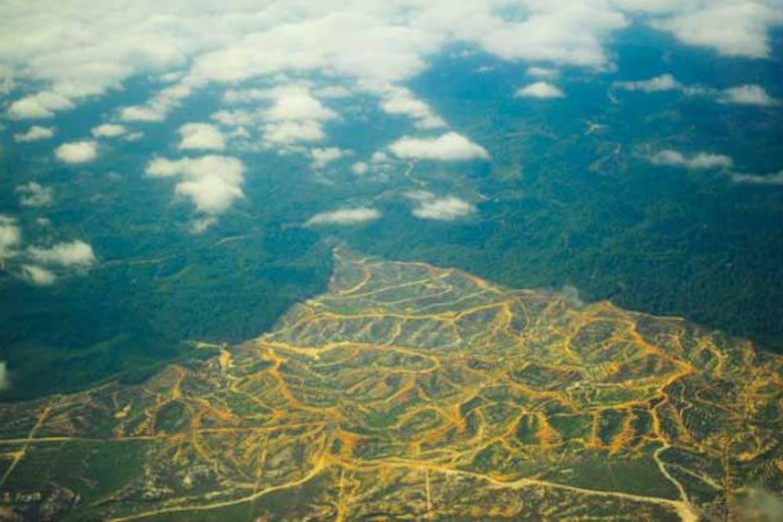 Sarawak timber concessions Global Witness