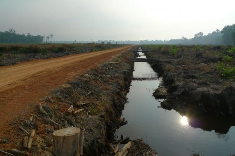 Indonesia deforestation photo