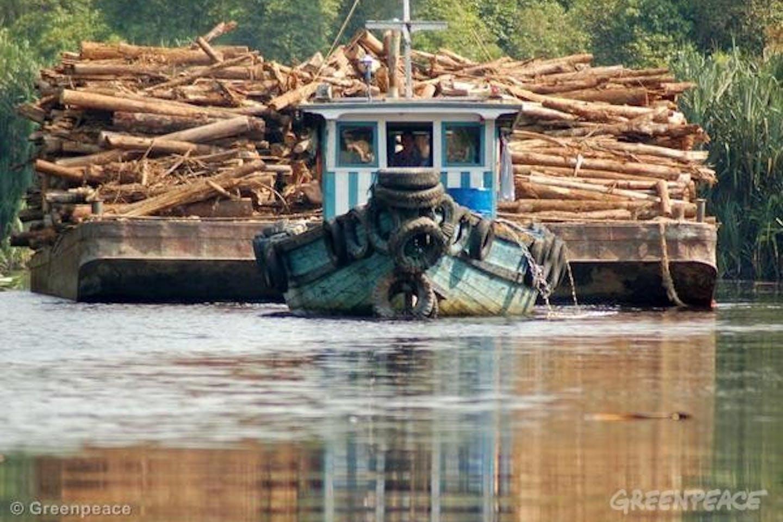 Indonesia illegal logging investigation Greenpeace