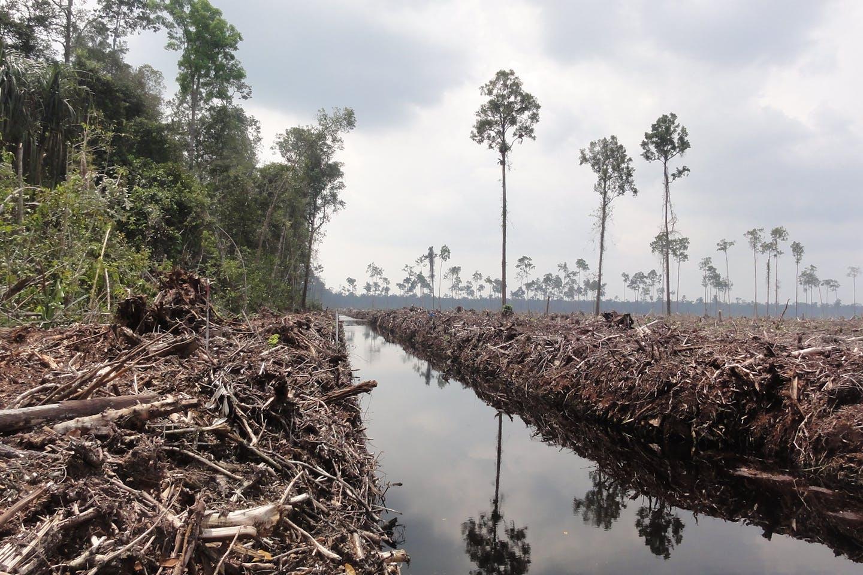 deforestation indo